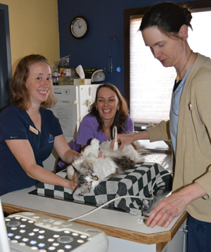 Three team members performing an ultrasound on a cat